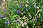 Blüten Allerlei!