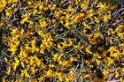 Blüten am Boden