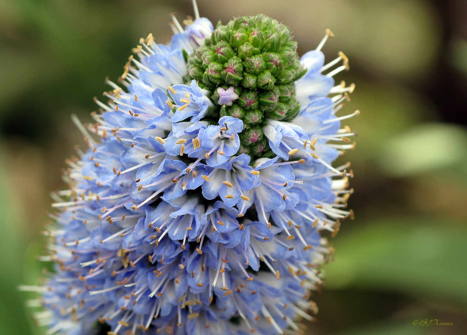 Blüten am Mittelmeer