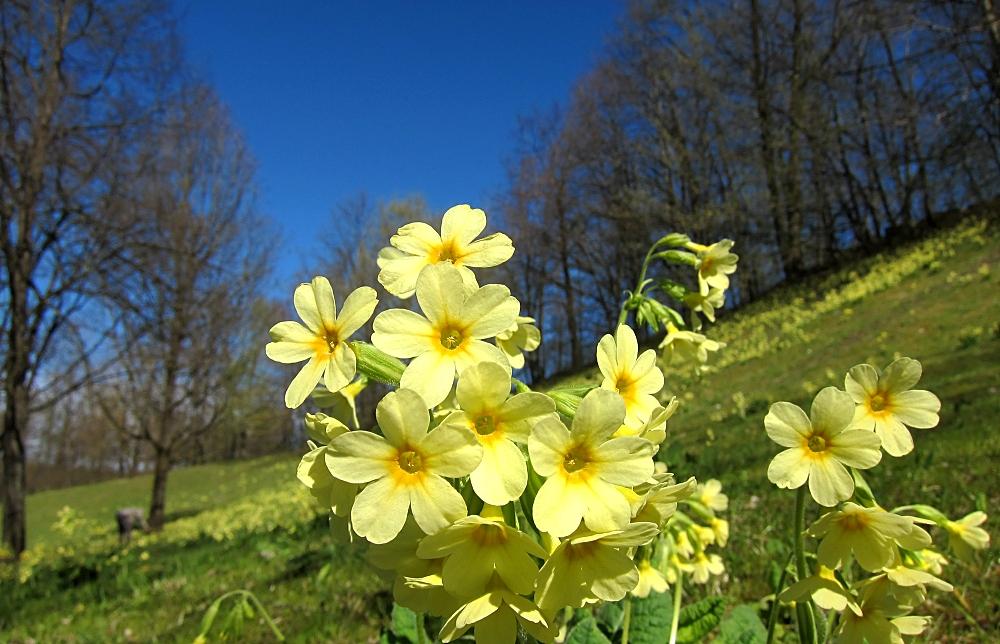 Blüten an Fotograf