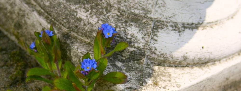 Blüten an Stein