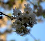 Blüten – April 2012 –25