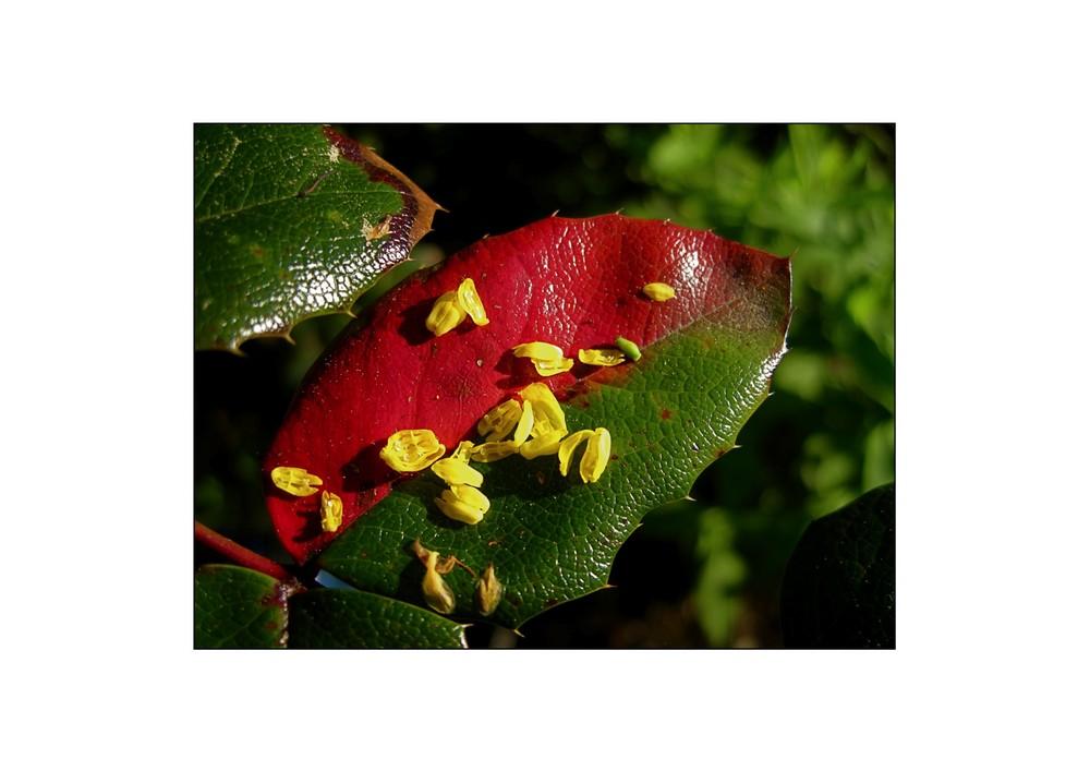 Blüten auf dem Tablett