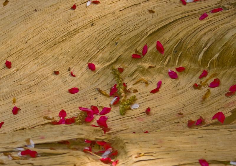 Blüten auf Wanderschaft
