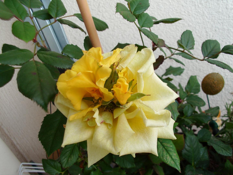 Blüten aus der Blüte