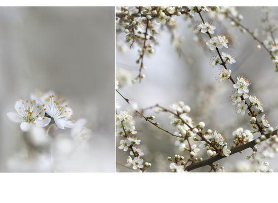 Blüten betrachten