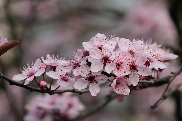Blüten-Bouquet