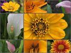 Blüten - Collage