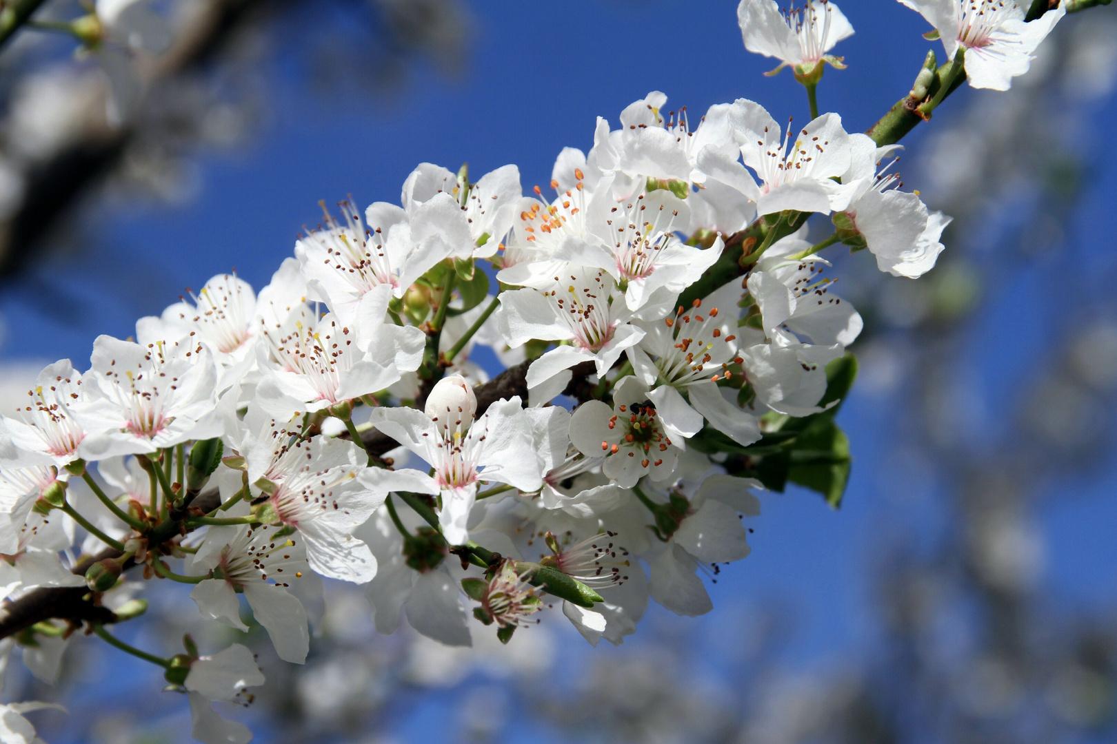Blüten contra Himmel