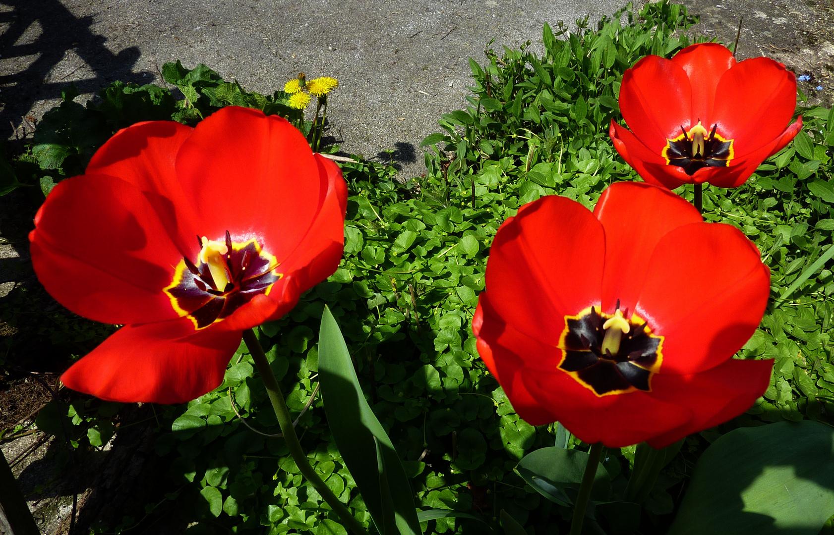 Blüten der Hoffnung