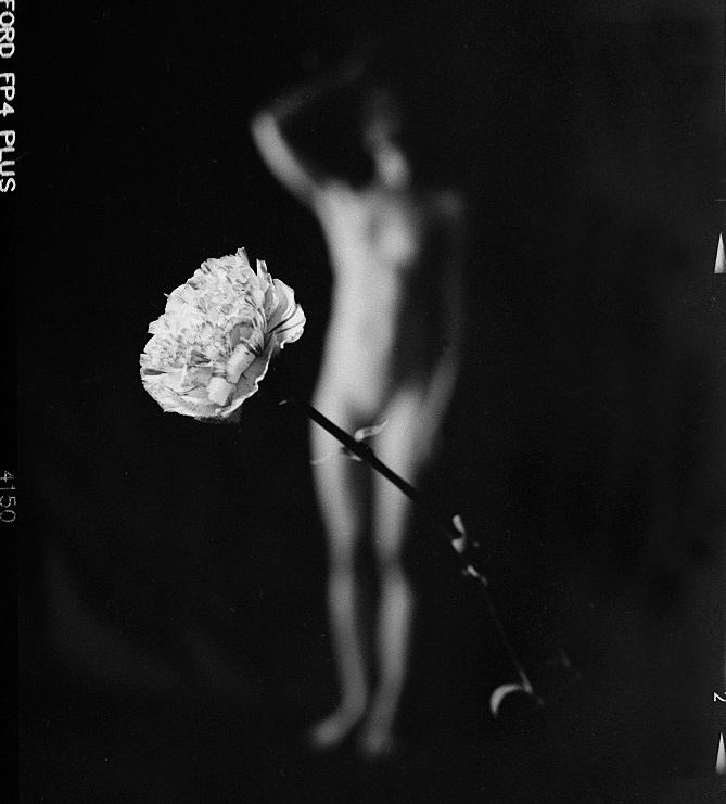 Blüten der Saison (Kalenderprojekt 2015: April)