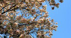Blüten des Frühlings....