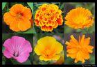 Blüten des Sommers
