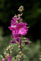 Blüten ...
