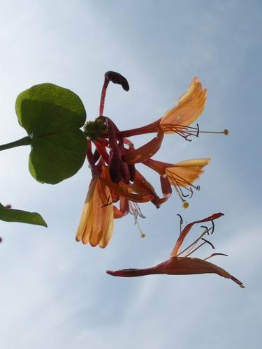 Blüten - Fall