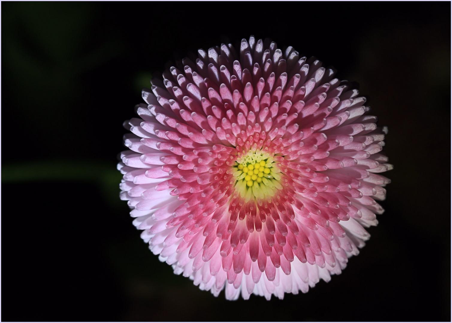 * Blüten - Feuerwerk *