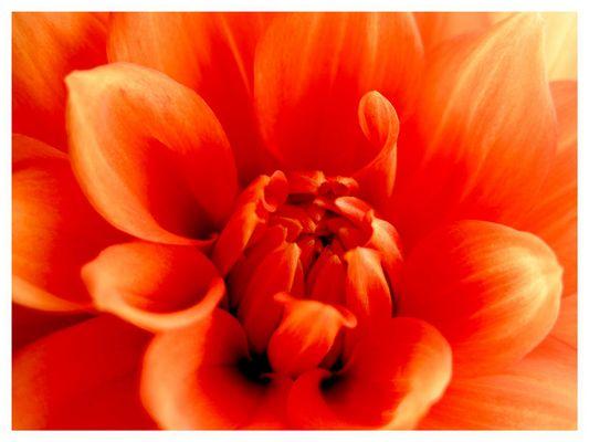 Blüten-Flammen