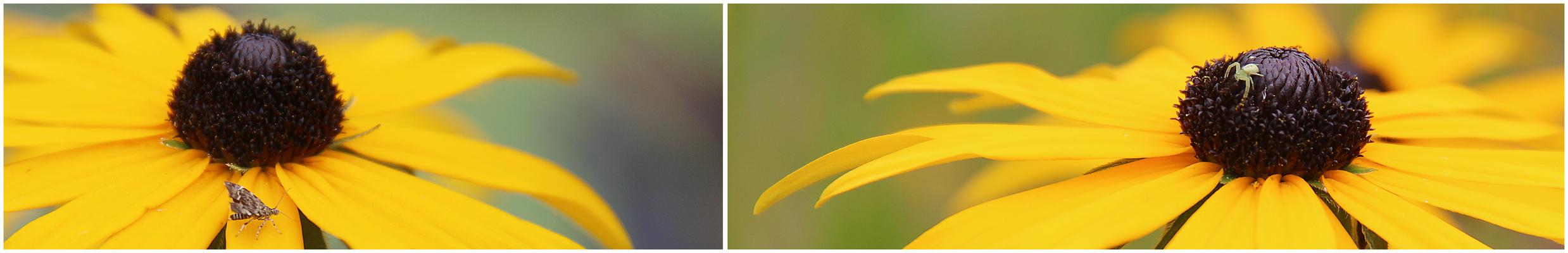 Blüten-Funde.