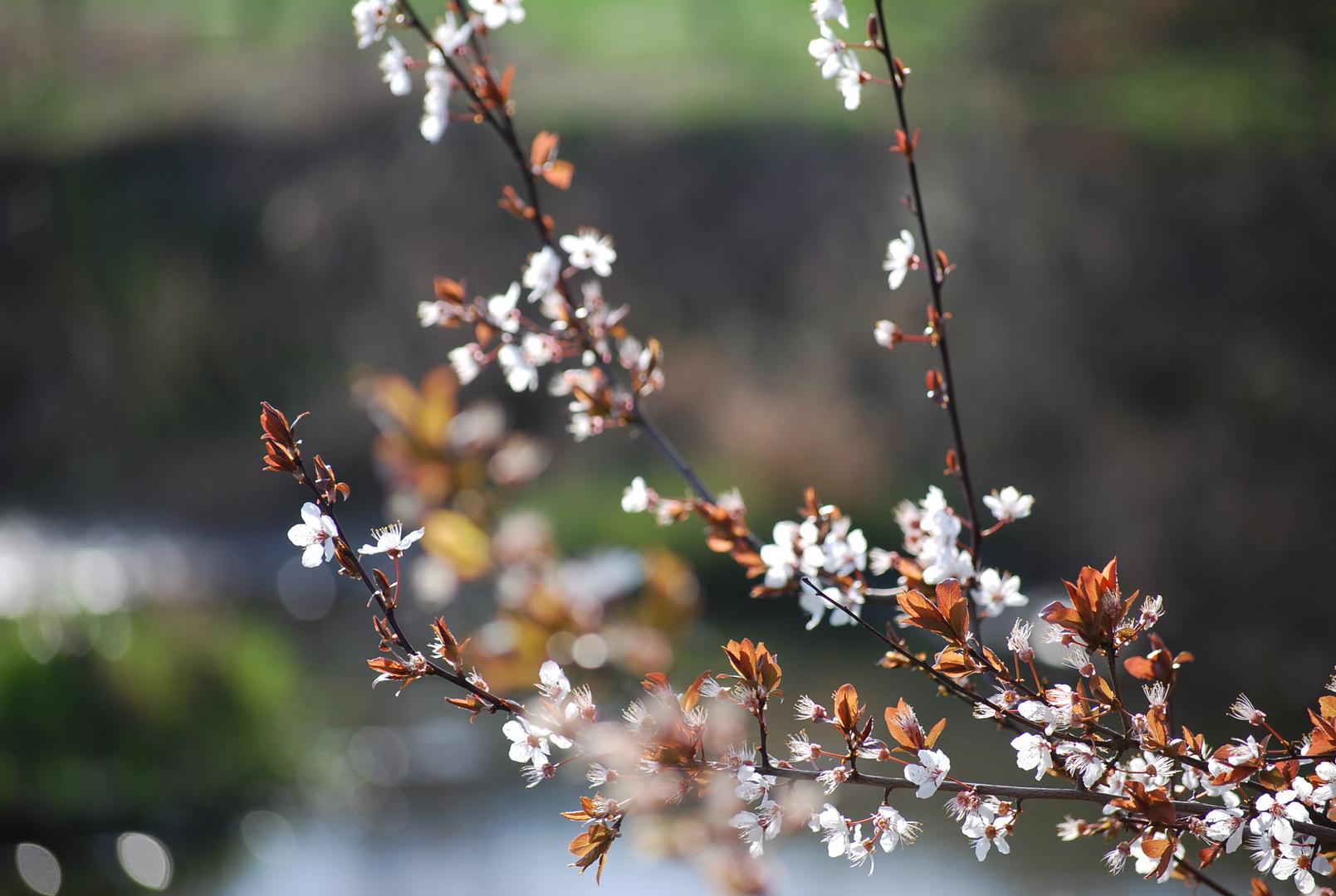 Blüten II