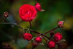 Blüten im Dezember 1