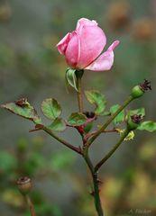Blüten im Dezember 4