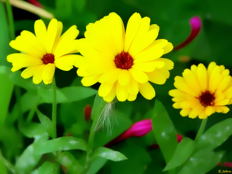 Blüten im Garten (1)