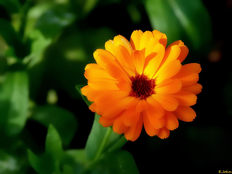 Blüten im Garten (2)