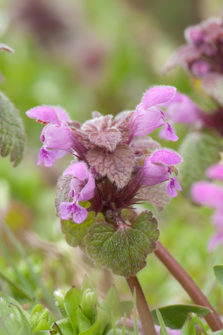 Blüten im Garten 2
