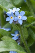 Blüten im Garten 3