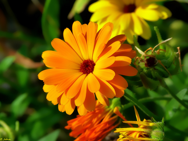 Blüten im Garten (3)