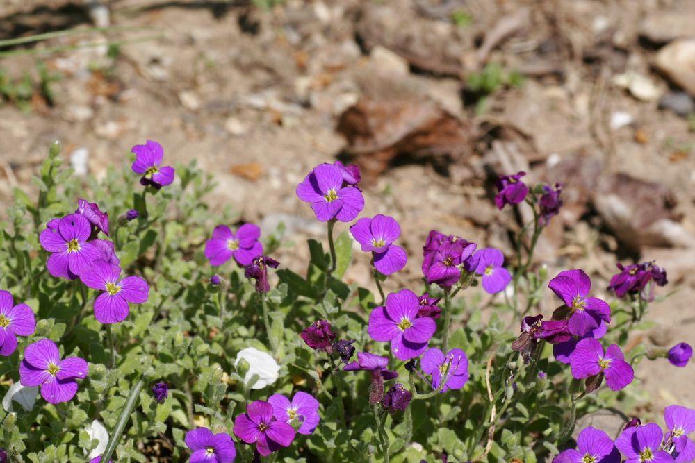 Blüten im Garten von Kisdia
