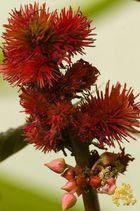 Blüten im Garten - Sonntagnachträtsel für Nichtfußballgucker...