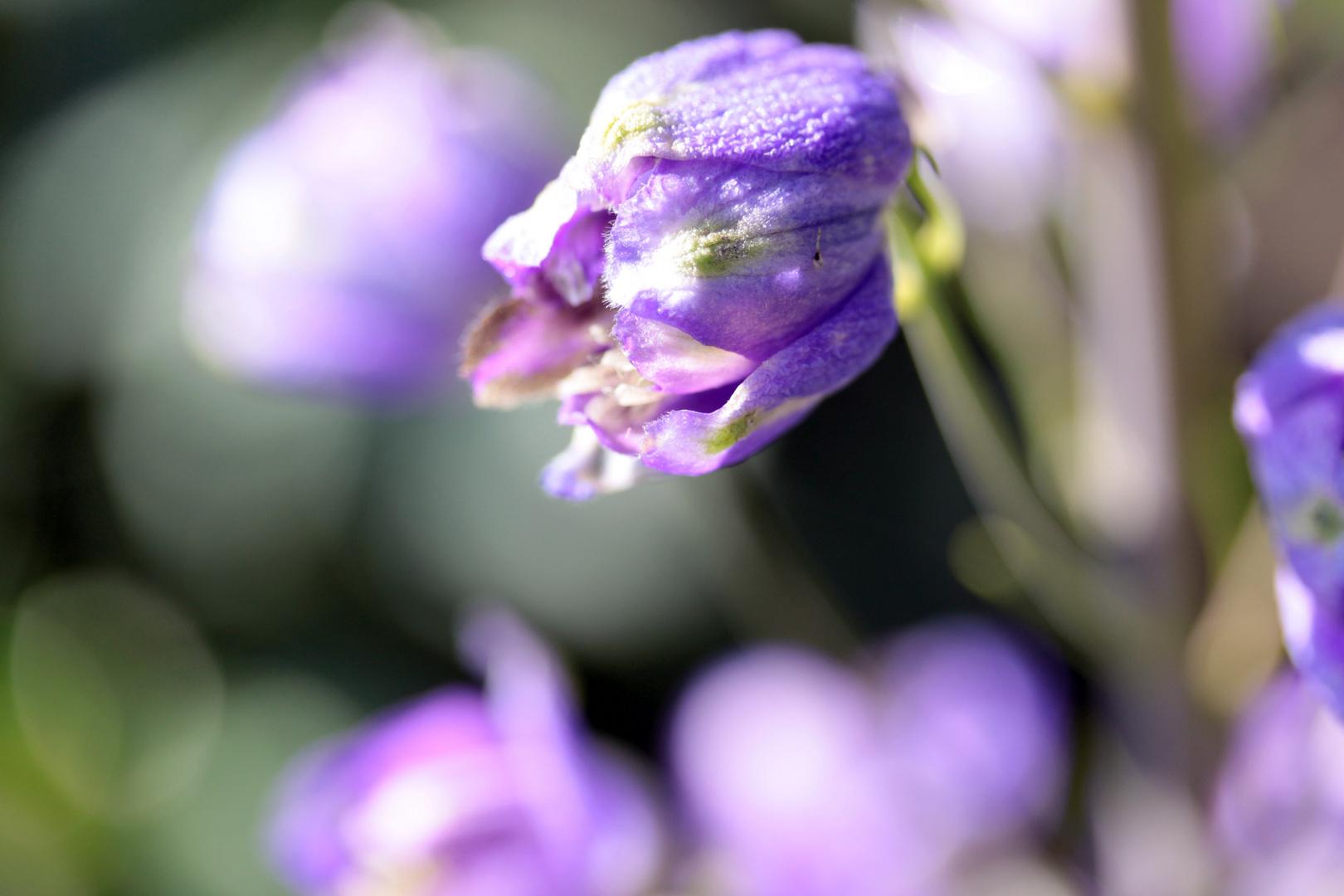 Blüten im Gartens
