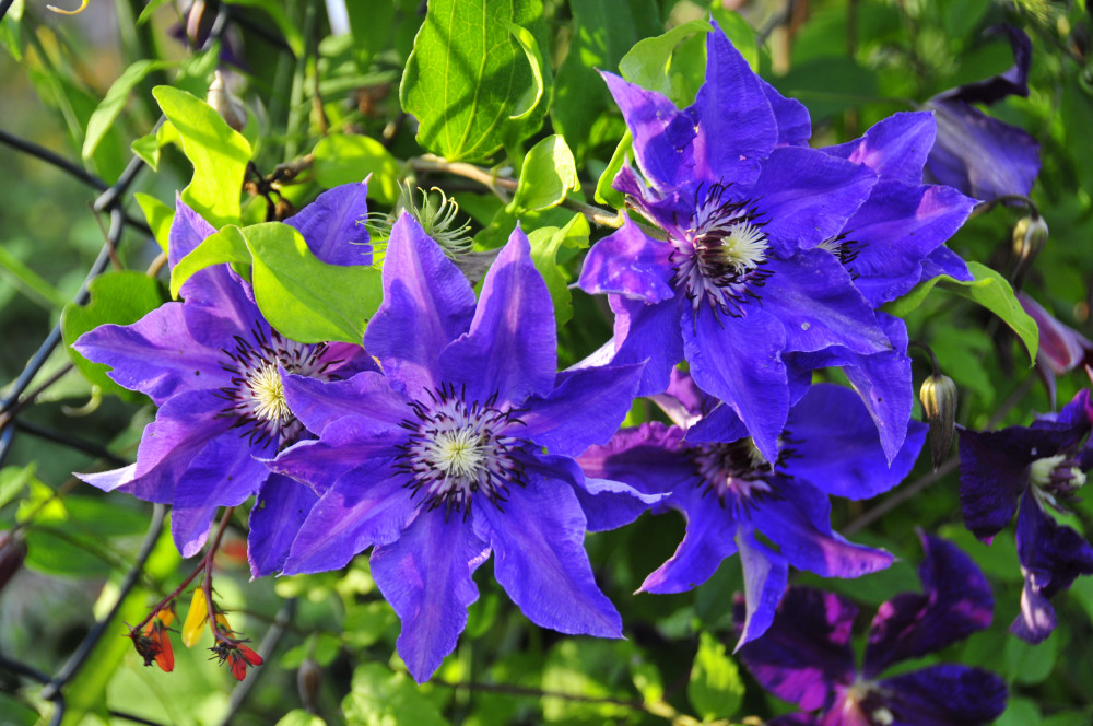 Blüten im Gartenzaun