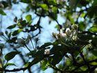 Blüten im Gegenlicht 1