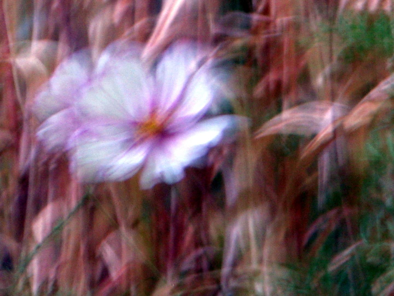 Blüten im Innenhof Depot/Abendlicht 2