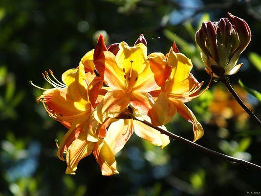 Blüten im Licht