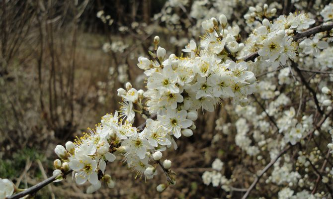 Blüten im Mai