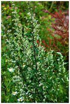 Blüten im Moor 2