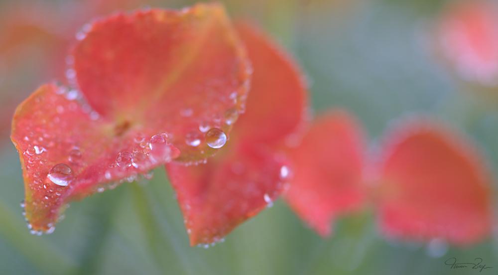 Blüten im morgentlichen Tau