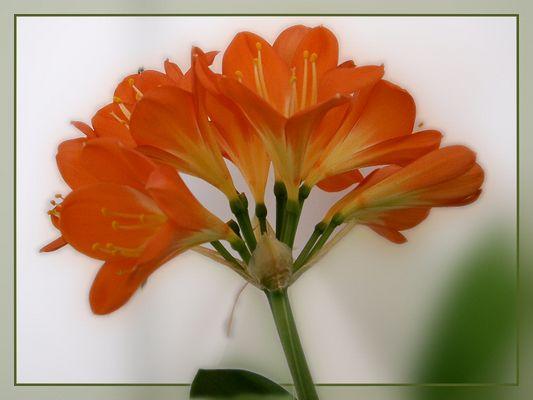 Blüten im Rahmen