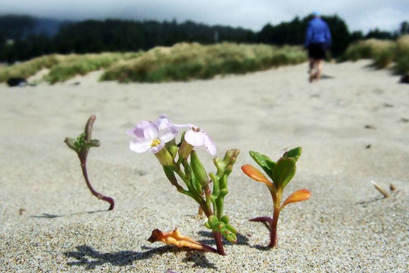 Blüten im Sand