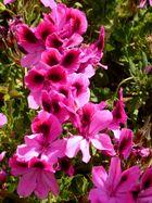 Blüten im Wind …