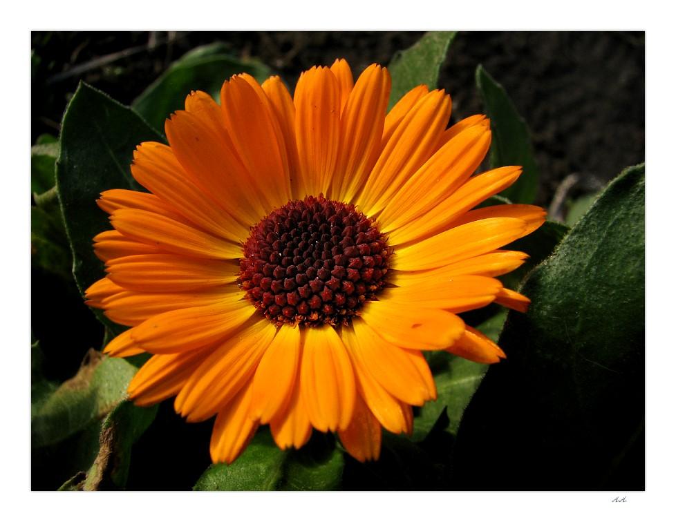 ..Blüten im Winter...