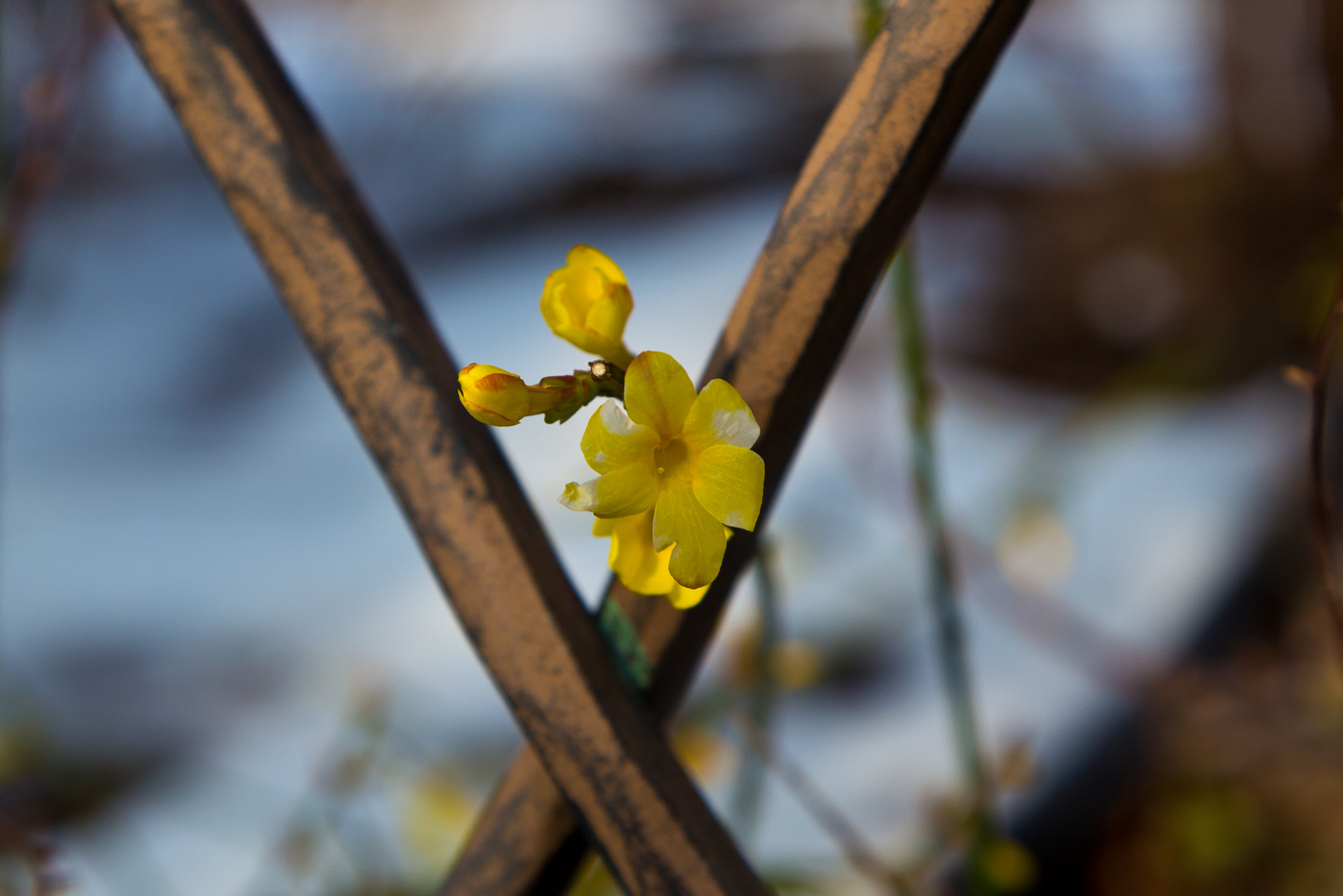 Blüten im Winter