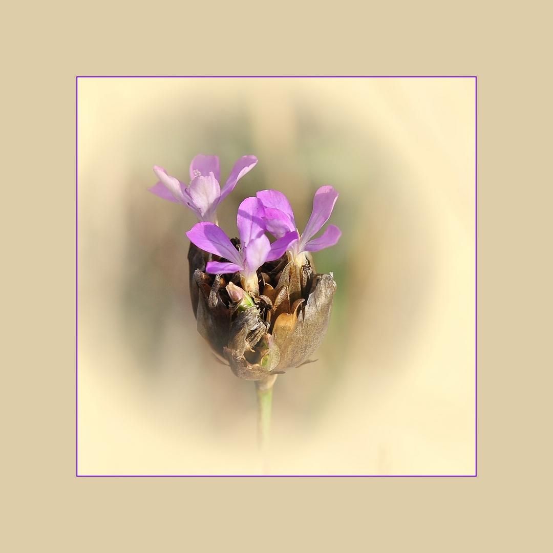 Blüten in der Blume......