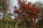 Blüten in der Herbst - Sonne