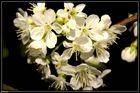 Blüten in der Nacht