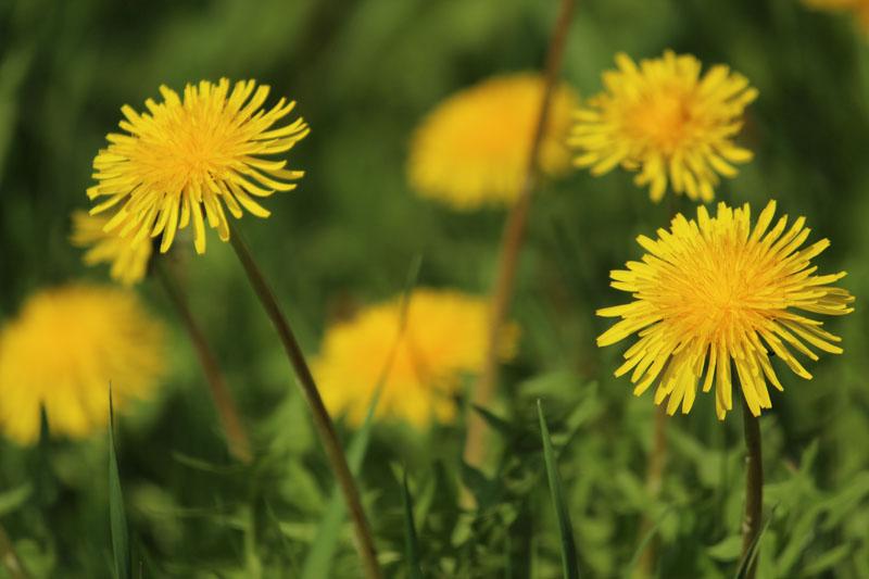 Blüten in der Sonne