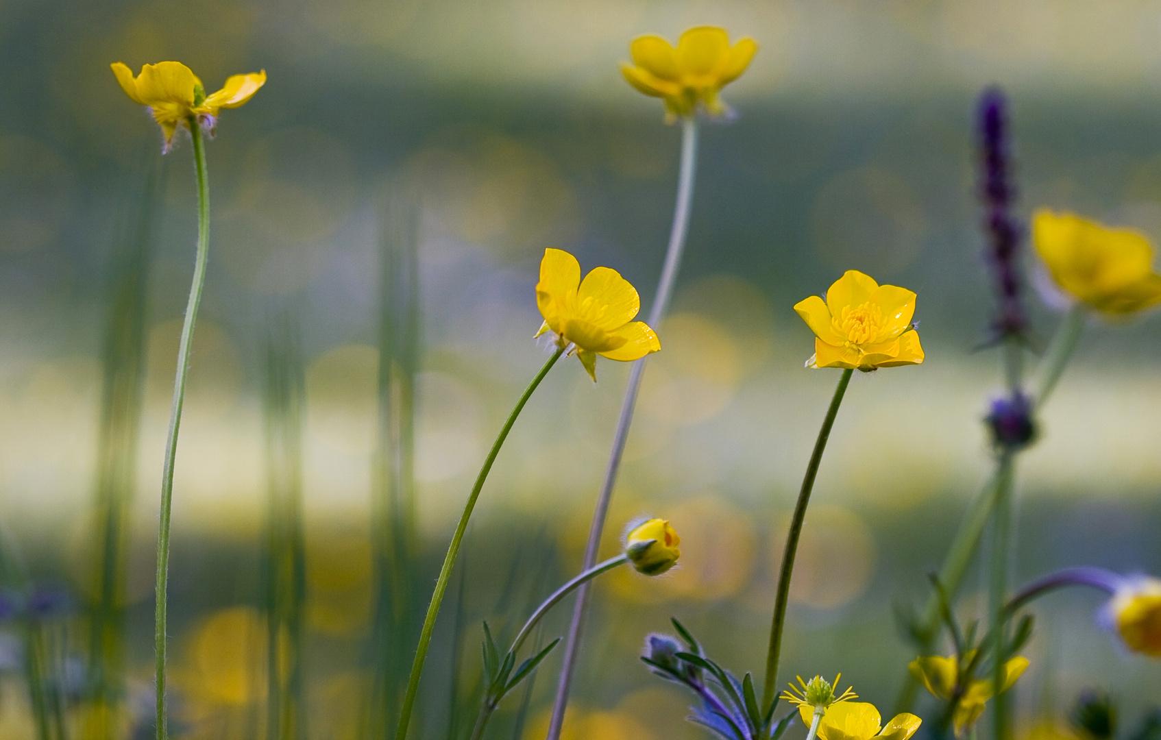 Blüten in der Wiese